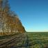 Полезащитные лесополосы защищают поля от вредных антропогенных воздействий. Берегите их!
