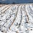 Для чего нужно снегозадержание на полях?
